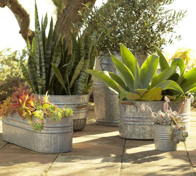 Galvanized planters with succulents - from potterybarn.com