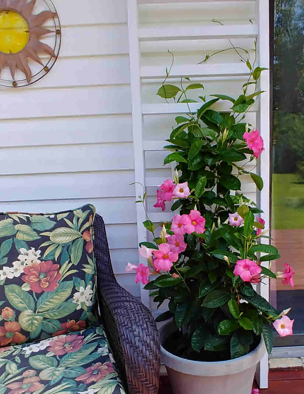 Flowering container plant with pink flowers and a large trellis and deck chair.
