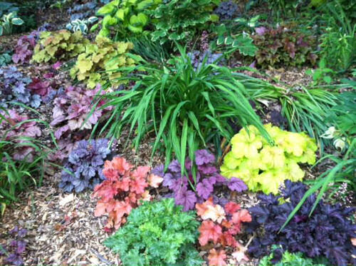 Heuchera Plant Care - Growing Coral Bells