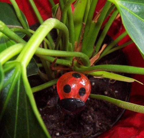 thirsty ladybug light