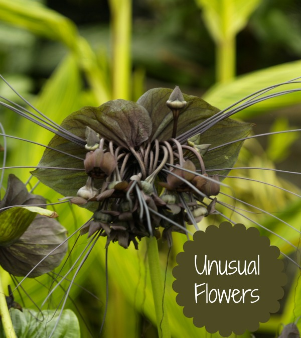 Unusual flowers the best of the best the gardening cook mightylinksfo Image collections