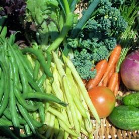 vegetable harvest june 15