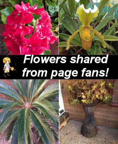 Flowers shared from my fans