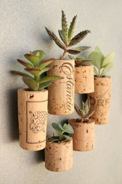 Wine Corks with magnets attached and planted with succulents