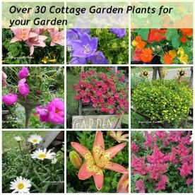 30 Cottage Garden Plants