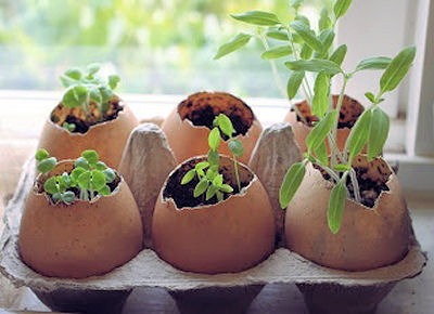 Egg shells as seed starters. Plant the whole thing and it adds calcium to the soil.