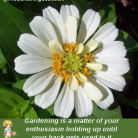 Gardening Quote about stamina