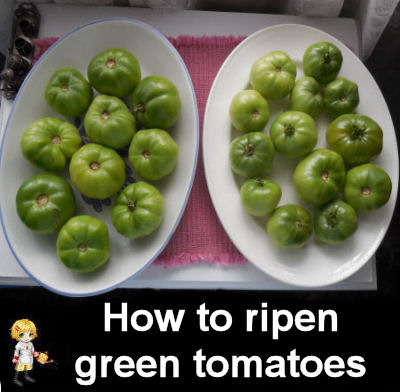 How to ripen green tomatoes indoors.