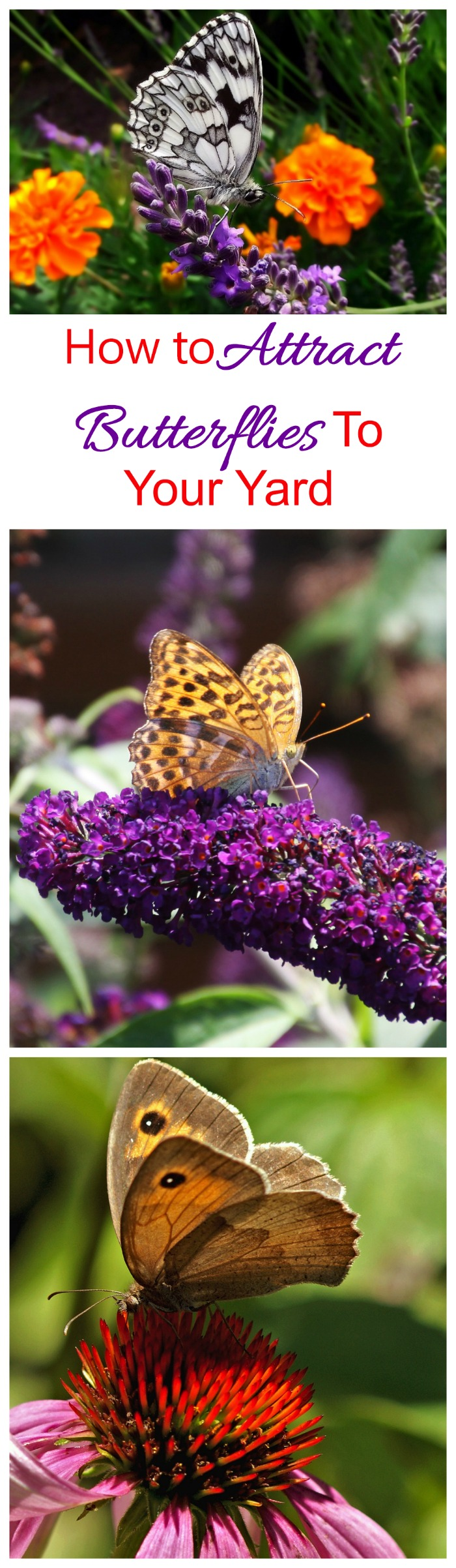These Tips For Attracting Butterflies Will Make Your Garden A Butterfly  Magnet.