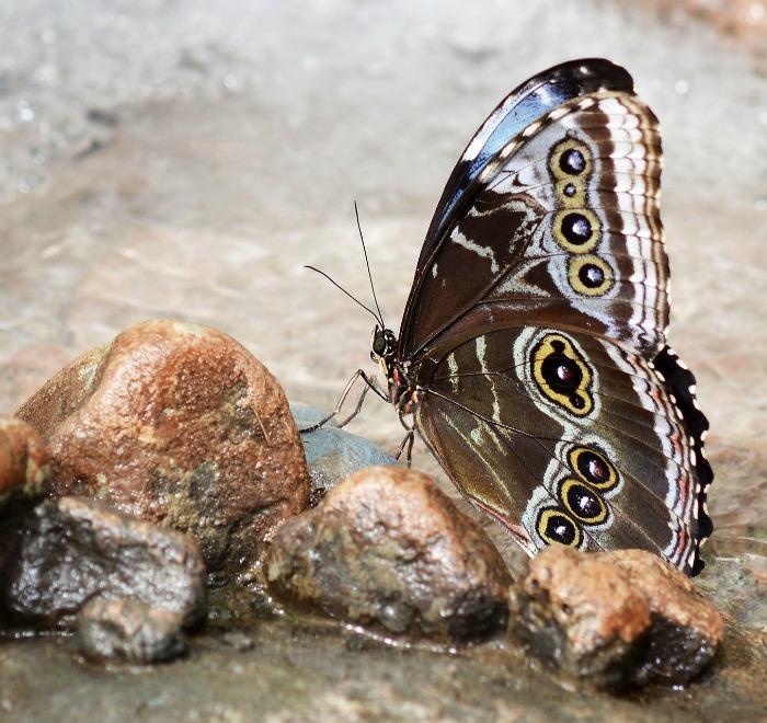 Butterfly watering spot