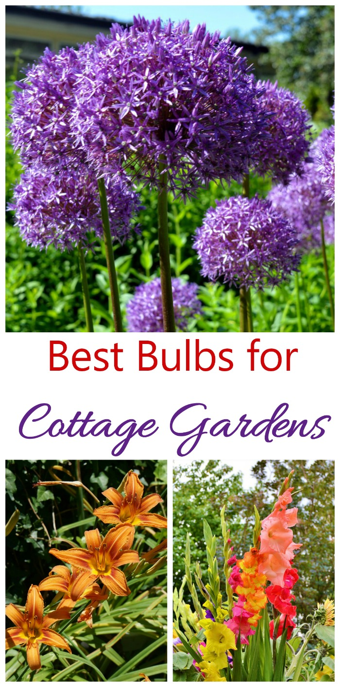 Plant flowering bulbs in a cottage garden wisely for season long color. Allium, daylilies and gladiolus are great choices
