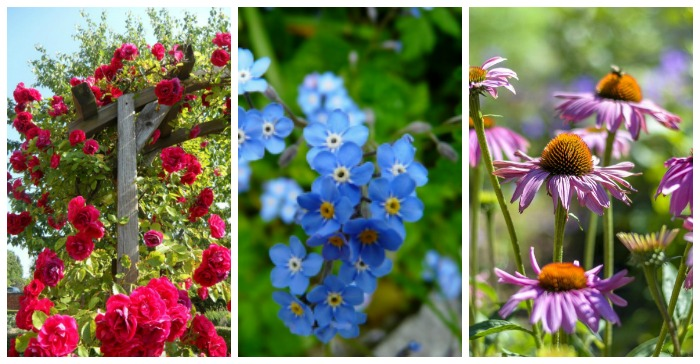 Cottage Garden Plants - Perennials Annuals & Bulbs for Cottage Gardens