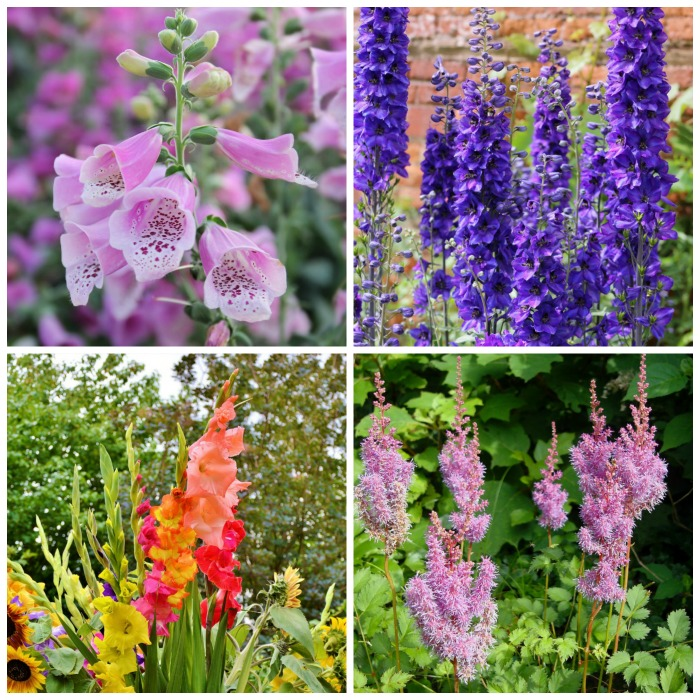 Perennials, annuals, biennials and bulbs for cottage gardens