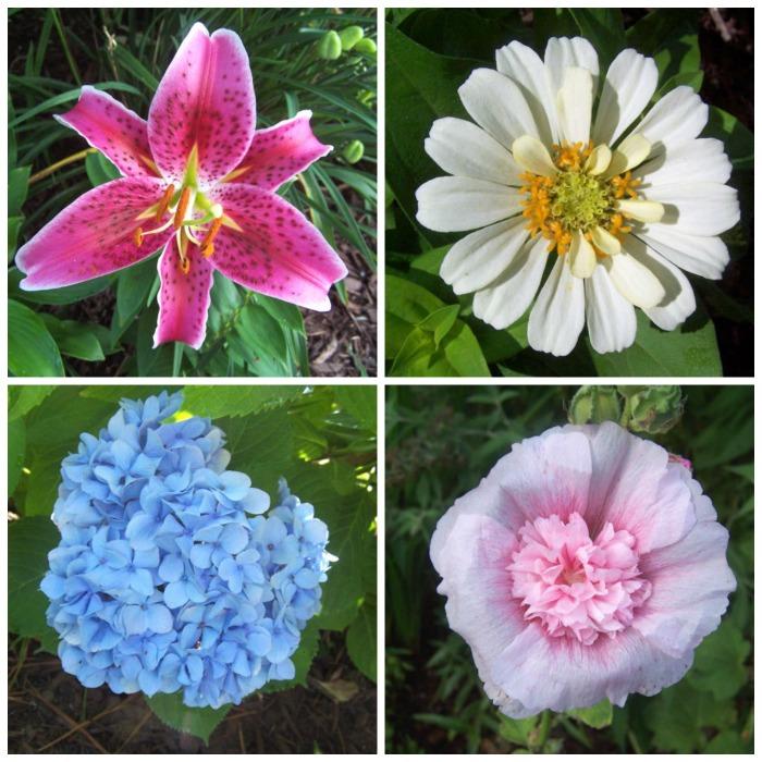 Summer garden tour