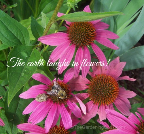 The Earth Laughs in Flowers Inspirational Quote