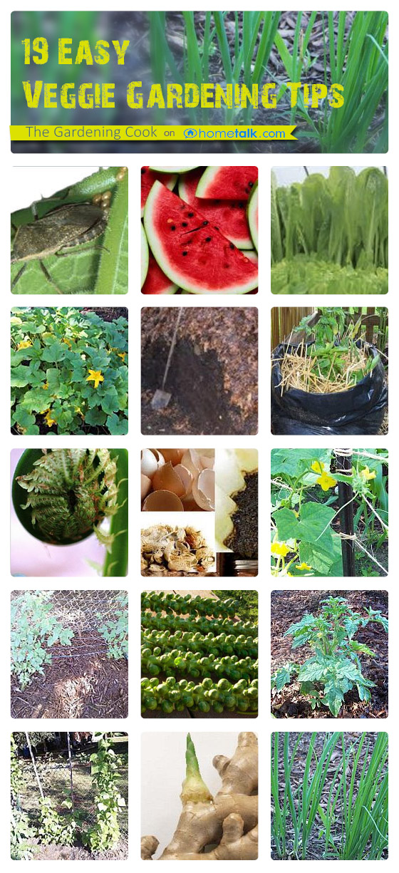 19 Vegetable Garden Tips that you need to know