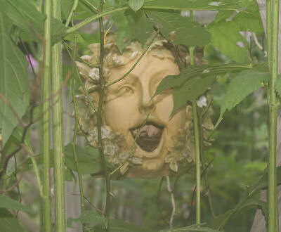 Garden Face behind shrubs
