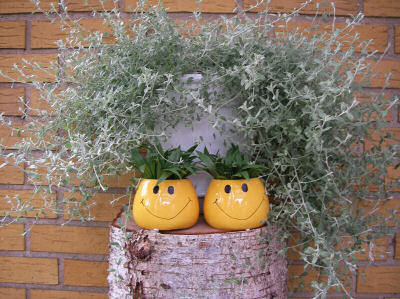 Just smile planters!