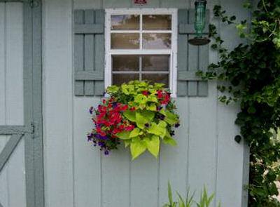 Sweet potato vine in a window box.
