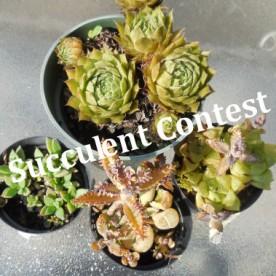 Succulent Contest