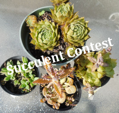 Best Succulent Containers Contest 2013