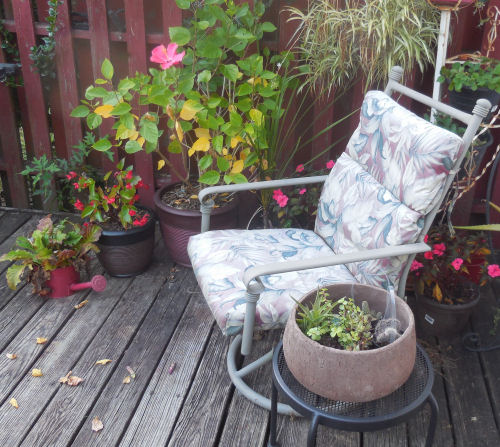 patio chair for morning coffee.