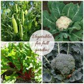 Vegetables for fall gardens
