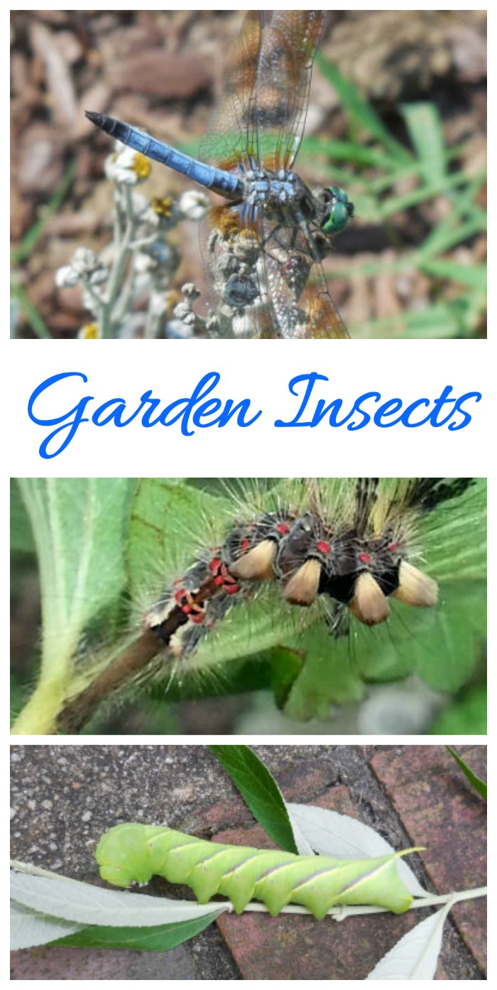 Garden insects can be both beneficial and destructive