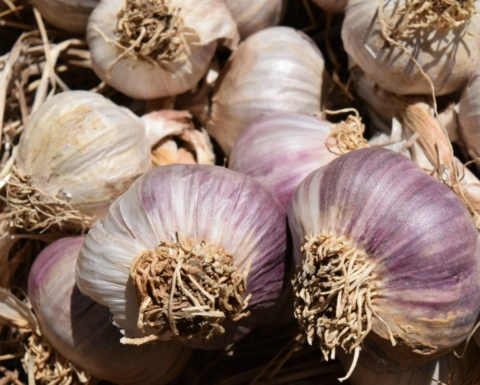 Plant garlic in the fall for next year's crop