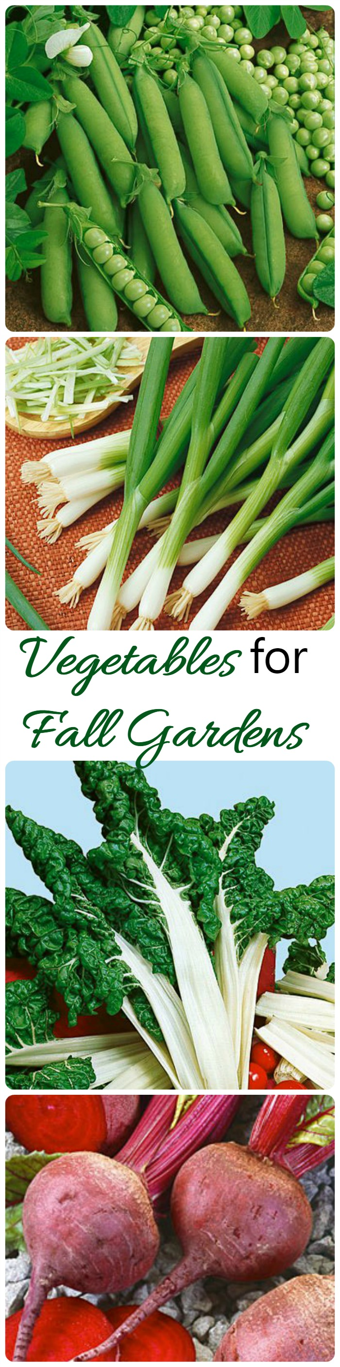 Summer Is Coming To An End But There Are Lots Of Vegetables That You Can Grow