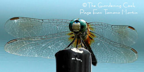Dragonfly on a porch post