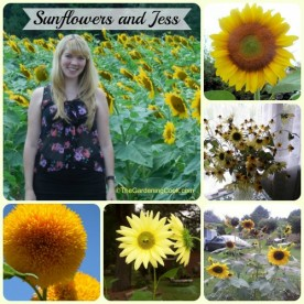 Sunflowers and My daughter Jess