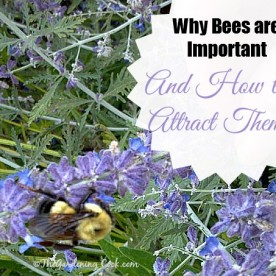 Bees are so important in our gardens. Find out why and how to attract them at https://thegardeningcook.com/the-importance-of-bees-in-nature/