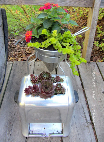 Vintage Toaster used as a succulent planter.