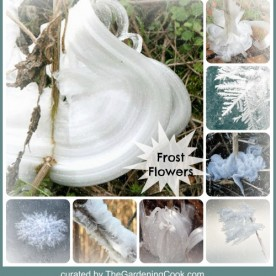Frost Flowers - Nature's short lived Beauties