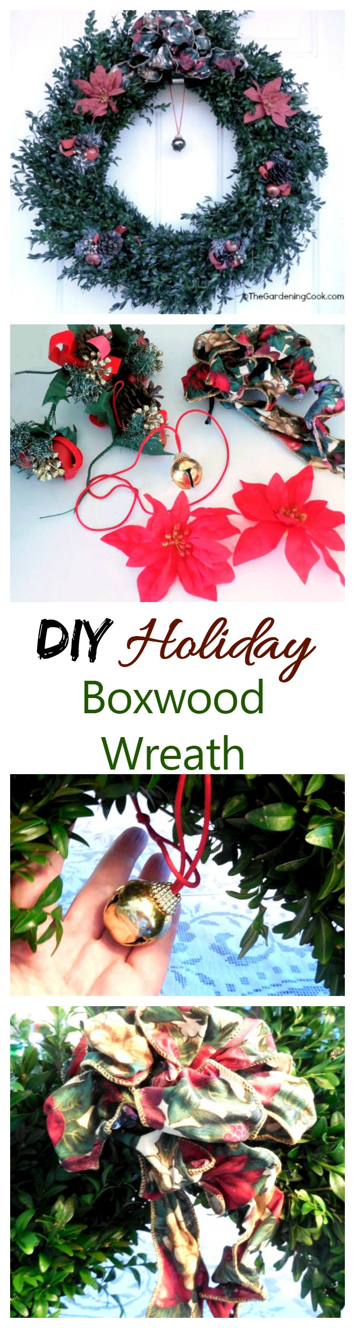 This DIY boxwood Christmas wreath is a nice change from a traditional fir type of wreath. See how to make it on thegardeningcook.com