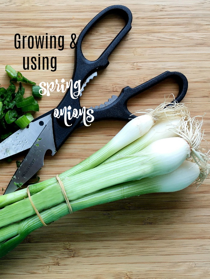 Tips for using, harvesting and growing spring onions