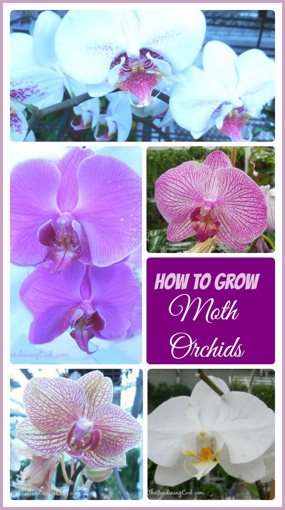 Looking for blooms that last many months? Try Moth ordhids - Phalaenopsis - They are easy to grow and perfect for beginners.