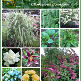 Growing Perennials and Vegetables in the Same Garden Space
