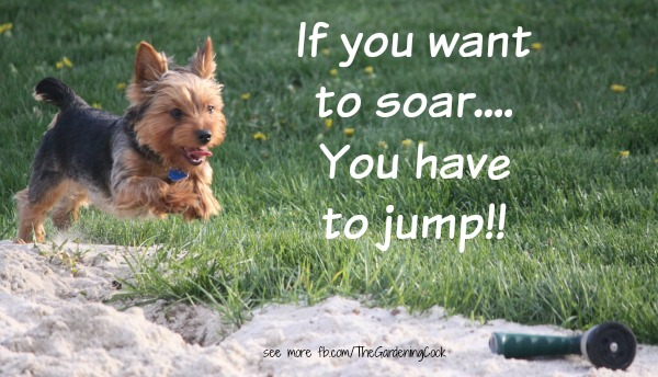 If you want to soar, you have to jump.