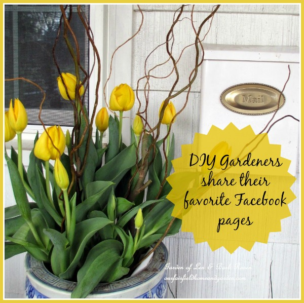 DIY Gardeners Share Their favorite Facebook pages