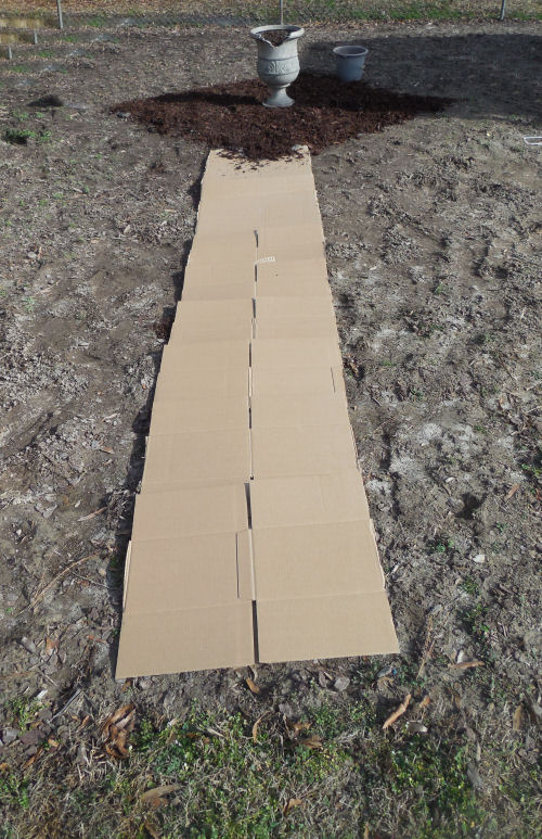 Cardboard controls weeds on my path