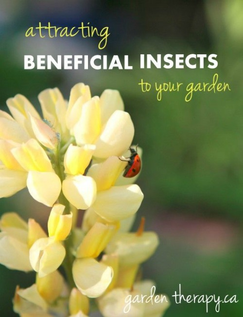 Attracting Beneficial Insects ##EarthDayProjects from gardentherapy.ca