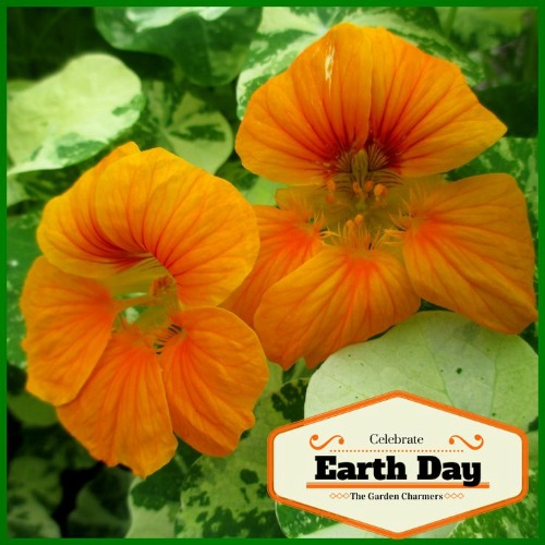 50 Ways to Celebrate Earth Day #EarthDayProjects from ourfairfieldhomeandgarden.com