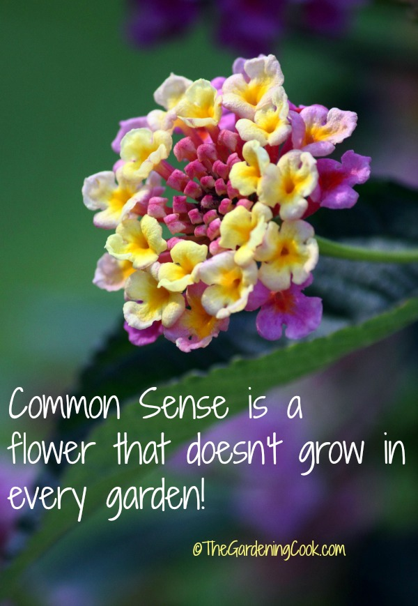 Common Sense quote