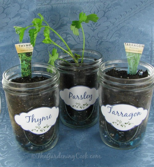 Herb plant labels