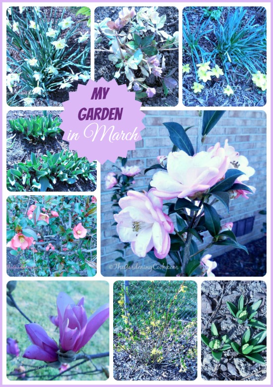 My garden in March. Lots of pretty blooms even this early
