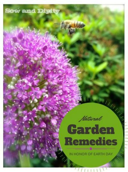 Natural Garden Remedies #EarthDayProjects from sowanddipity.com