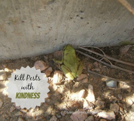 Working With Nature to Kill pests #EarthDayProjects from sensiblegardening.com
