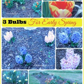 Three Easy bulbs for a great display in early spring.